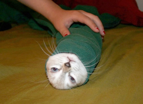 Behold the purrito!