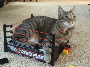WCW; World Cat Wrestling