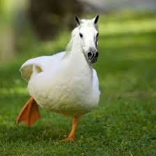 First Cat Duck and now Horse Duck.