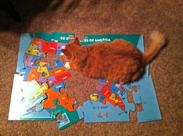 He's taking over the world like this cat is taking over America.