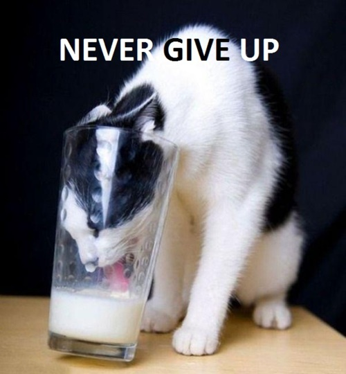 Never give up Magnus.