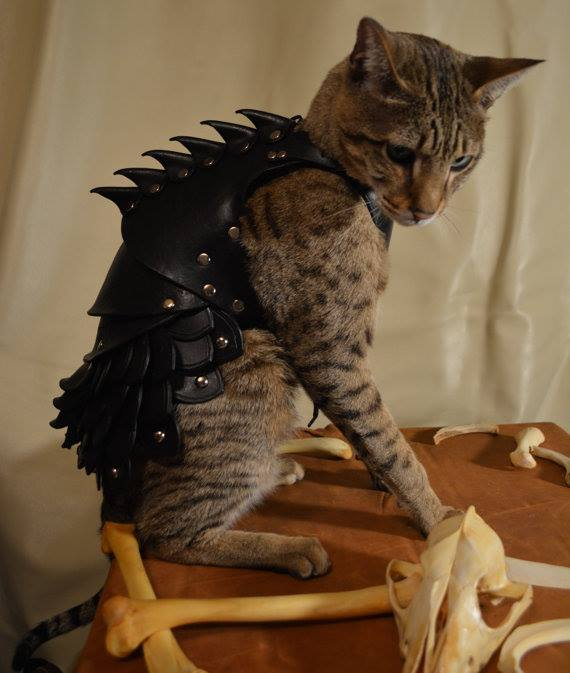 AJ is edgier than this cat battle armour. Yes, this is a real thing you can buy.